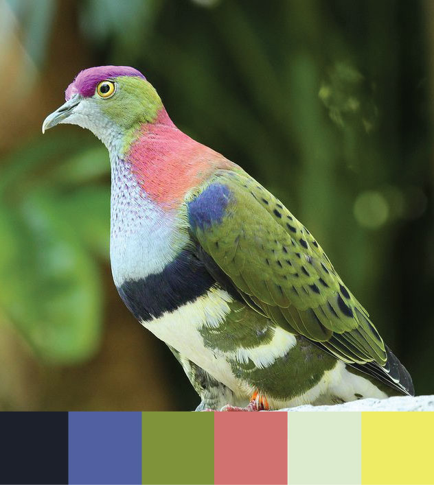 Fruit-Dove