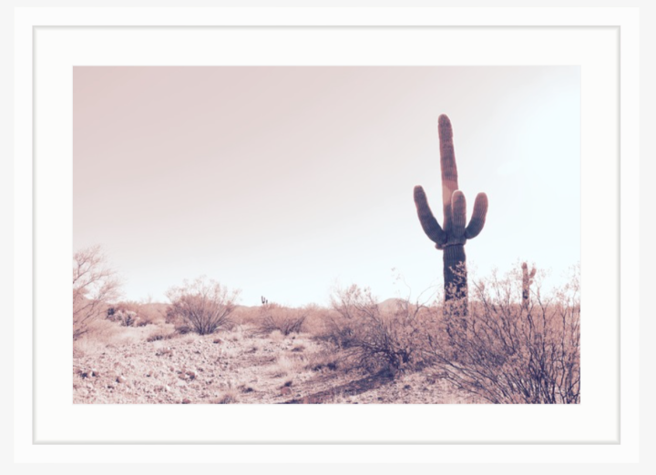 a vintage inspired photo of a desert landscape with a single saguaro in a white frame
